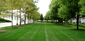 COMMERCIAL GROUNDS CARE, Commercial Maintenance, corporate campuses